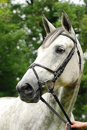 Wielkopolska Horse